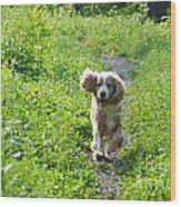 Dog Running In The Green Field Wood Print