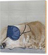 Dog Sleeping With A Sleep Mask Wood Print