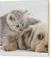 Dog Surrendering To Kitten Wood Print