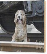 Dog Under A Train Wagon Wood Print