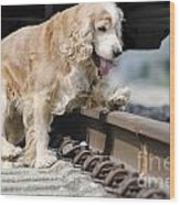 Dog Walking Over Railroad Tracks Wood Print