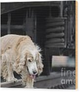 Dog Walking Under A Train Wagon Wood Print