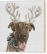 Dog With Antlers Wood Print