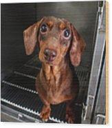 Dog With Eyes Wood Print