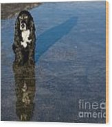 Dog With Reflections And Shadow Wood Print