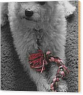 Dog With Tug Toy Soft Focus Wood Print