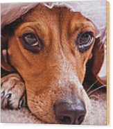 Dogs In Santa Hat Wood Print