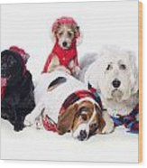 Dogs Wearing Winter Accessories Wood Print