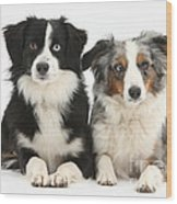 Dogs With Different-colored Eyes Wood Print
