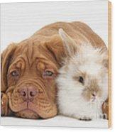 Dogue De Bordeaux Puppy With Bunny Wood Print