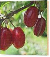 Dogwood Cornus Mas Berries Wood Print
