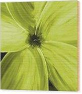Dogwood Bloom Yellow Wood Print