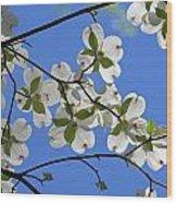 Dogwood Blossoms 2 Wood Print