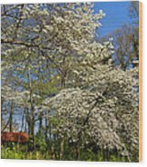 Dogwood Grove Wood Print by Debra and Dave Vanderlaan