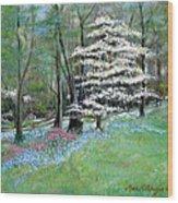 Dogwood In Springtime Wood Print by Max Mckenzie