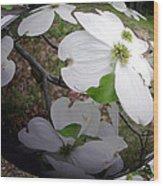 Dogwood Under Glass Wood Print