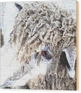Dolly Dwc Wood Print