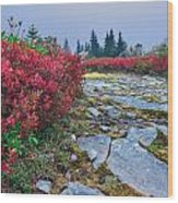 Dolly Sods Wilderness Wood Print