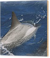 Dolphin Escort Wood Print