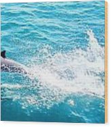 Dolphin In Baja Wood Print