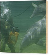 Dolphins Hover Near A Diver Holding An Wood Print by Luis Marden