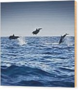Dolphins Playing In The Ocean Wood Print