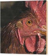 Domestic Chicken Wood Print
