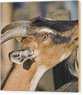 Domestic Goat Wood Print