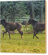 Domestic Horses Wood Print