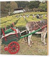 Donkey And Tea Gardens Wood Print