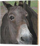 Donkey Eyes Wood Print