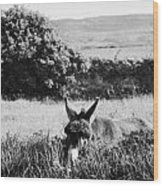 Donkey In The West Of Ireland Wood Print