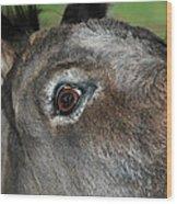 Donkey Stink Eye Wood Print