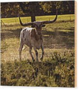 Don't Mess With Texas ..... Long Horns That Is  Wood Print