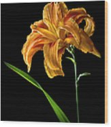 Double Day Lily Wood Print