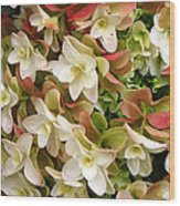 Double Hydrangeas  Wood Print