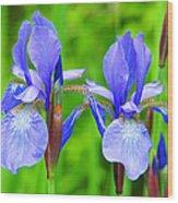 Double Iris Wood Print