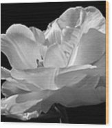 Double Late Angelique Tulip Wood Print