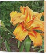 Double Old Fashion Day Lily Wood Print