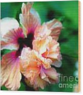 Double Peach Hibiscus Five Wood Print