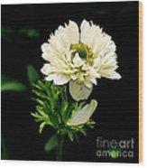 Double Poppy Anemone  2 Wood Print