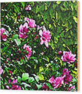 Double Rose Of Sharon Wood Print