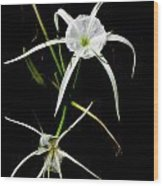 Double Spider Lily Wood Print