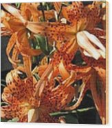 Double Tiger Lily Named Flora Pleno Wood Print