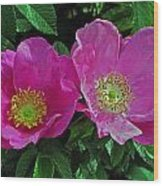 Double Wild Rose Wood Print
