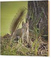 Douglas Squirrel Wood Print