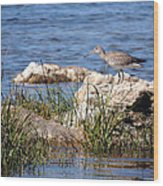 Dowitcher Wood Print