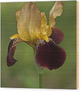 Down Home Two-tone Iris Wood Print