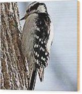 Downy Woodpecker 4 Wood Print