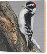 Downy Woodpecker Perched In A Tree Wood Print